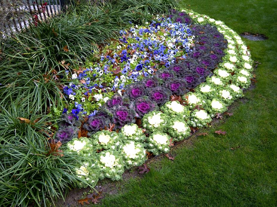 Maintain and service of flower beds color installation